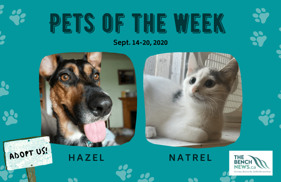 Pets of the week: Sept.14-20
