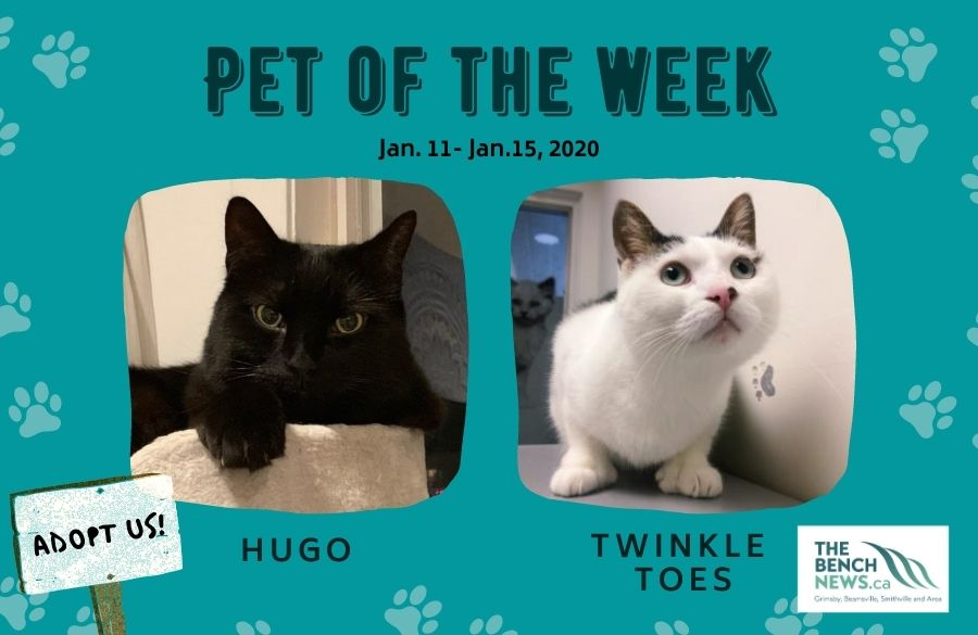 Pet Adoption of the Week - Hugo and Twinkle Toes